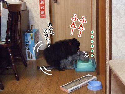 真熊VS寿喜