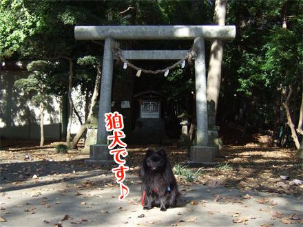 真熊と神社
