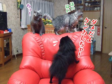 にいな&寿喜&真熊