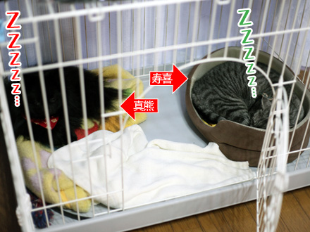 真熊のベッド