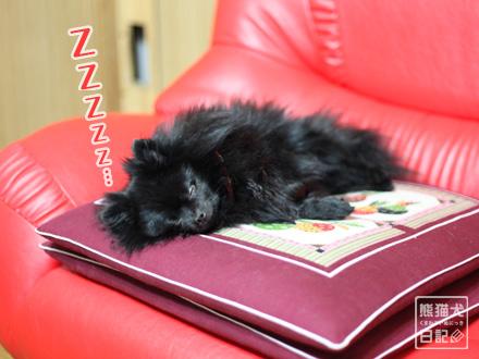 真熊、睡眠しながら服従