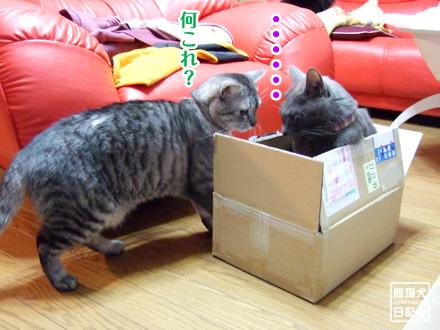 箱◇戦争 ②