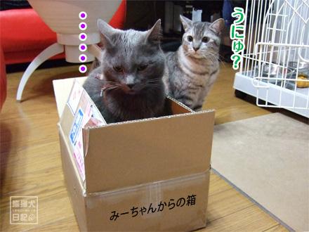 箱◇戦争 ①