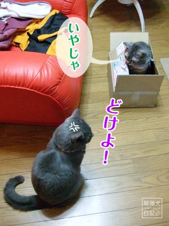 箱◇戦争 ⑦