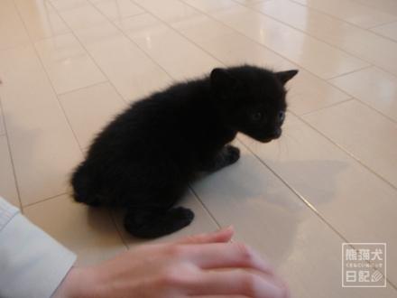 黒猫の白兵衛