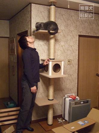 キャットタワー設置