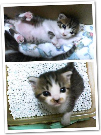 2005年8月に舞い込んできた猫