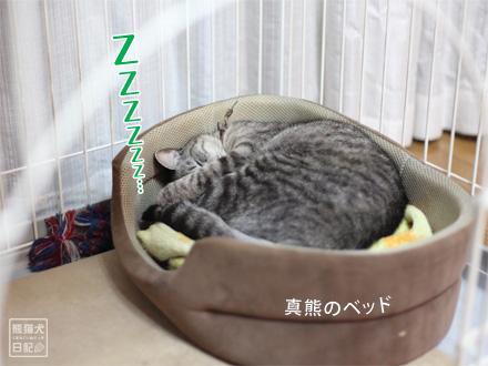 寿喜熟睡・・・