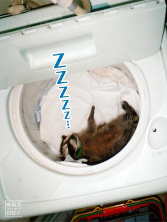 寝るのはもっぱら洗濯機の中