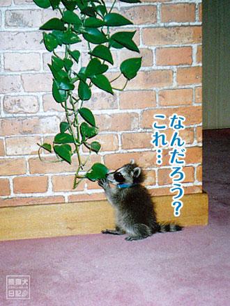 観葉植物に興味津々