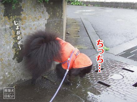 雨の中ちっち