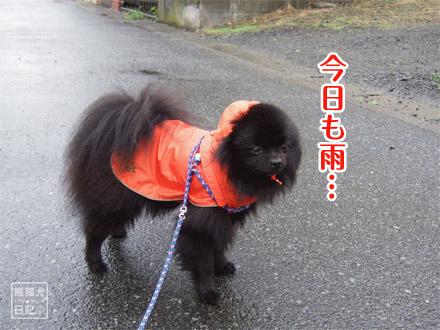 今日も雨・・・
