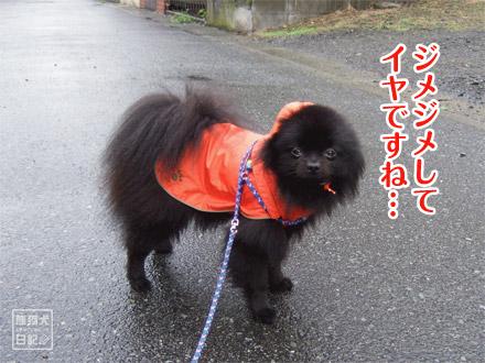 雨はイヤだ・・・・