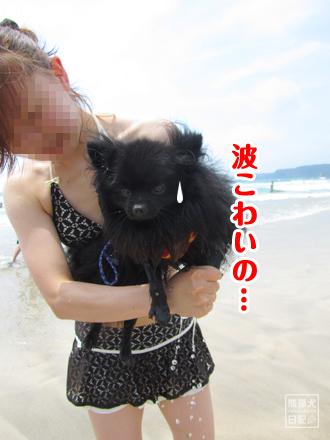 波を怖がるチキン犬
