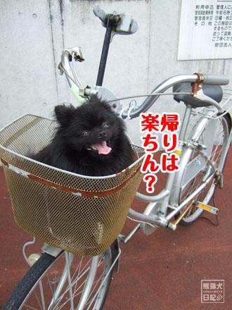 自転車のカゴに・・・