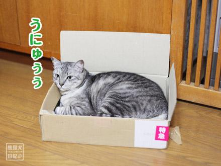 お気に入りの箱・・・②