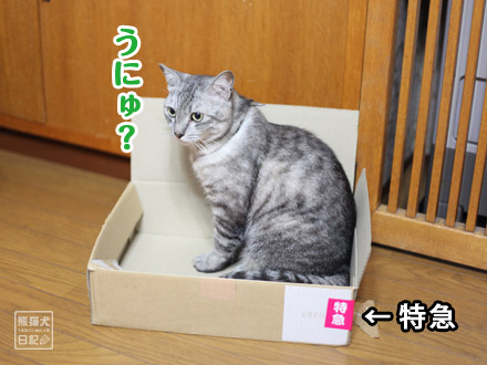 お気に入りの箱・・・①