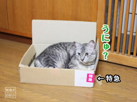 お気に入りの箱・・・③