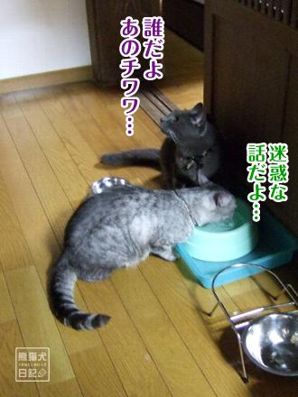 猫たちの不満・・・