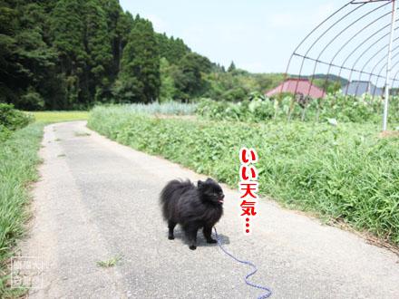 田舎の散歩風景①