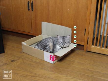 吸い込まれるように箱へ・・・