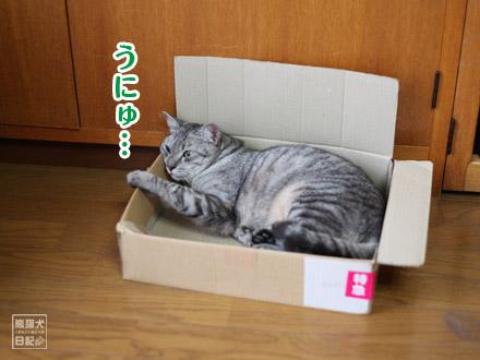 例によって箱の中・・・