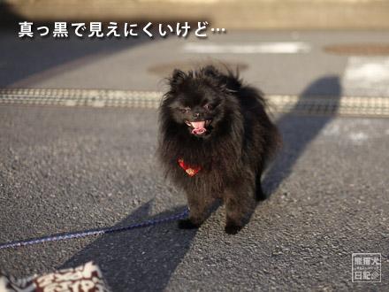 夕暮れ犬⑤