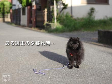 夕暮れ犬①