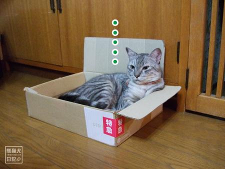 箱猫・・・