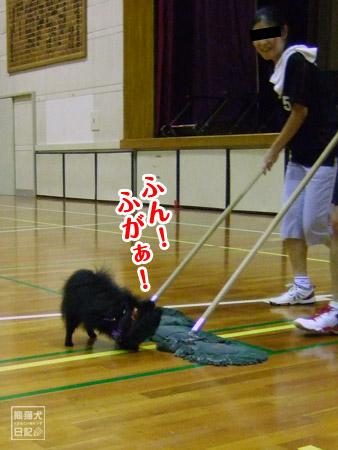 モップ追い犬