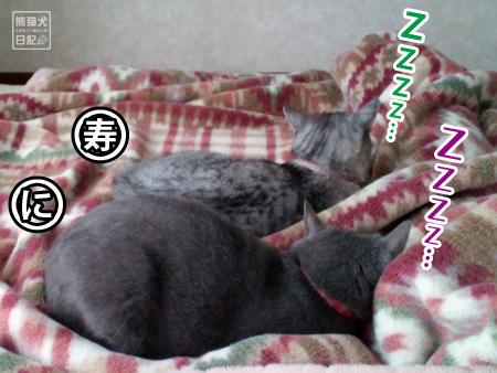にいな、寿喜、並列熟睡