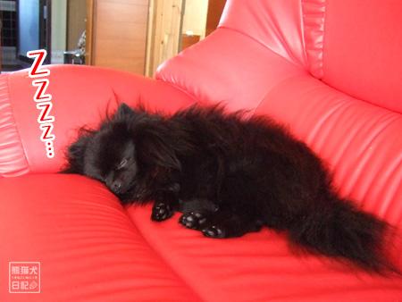 真熊の寝顔