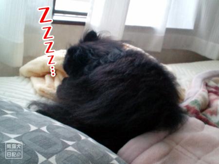 真熊、熟睡