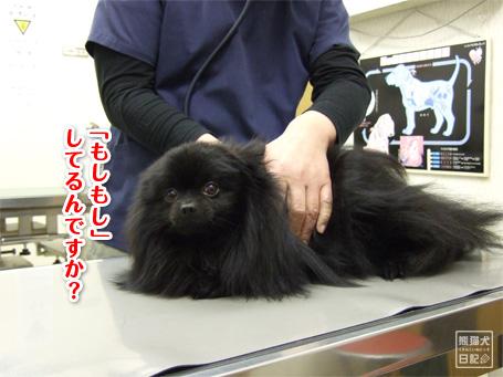 20110329_真熊の不調4