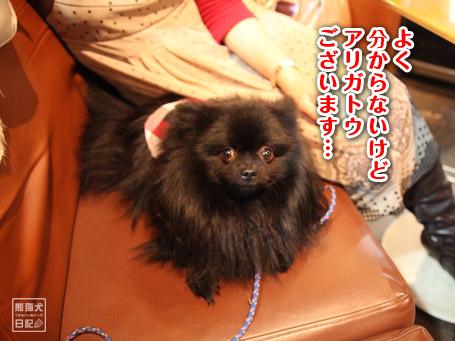 20110404_下北沢3
