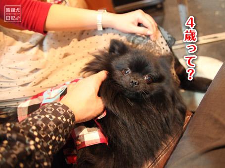 20110404_下北沢9