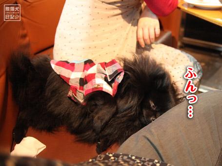 20110404_下北沢7