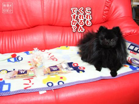 20110406_真熊のプレゼント6