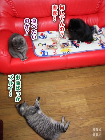 20110406_真熊のプレゼント11