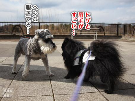 20110403_いろんな犬6