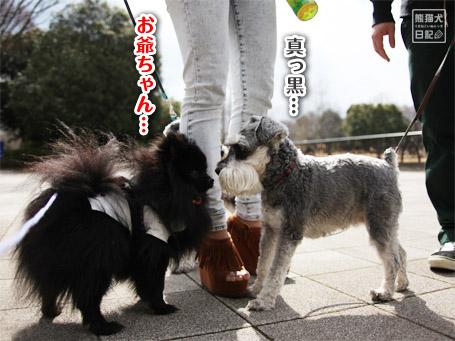 20110403_いろんな犬5