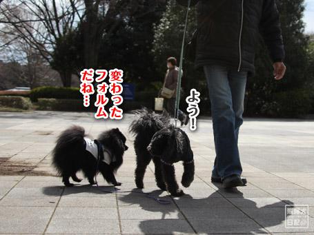 20110403_いろんな犬4