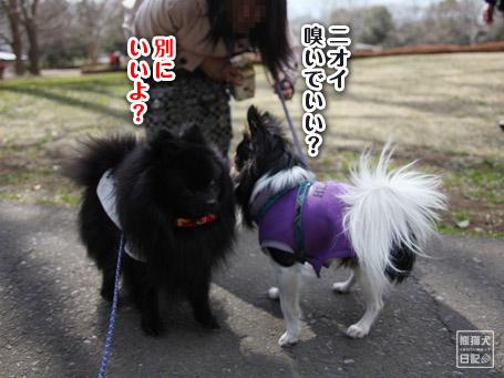 20110403_いろんな犬3