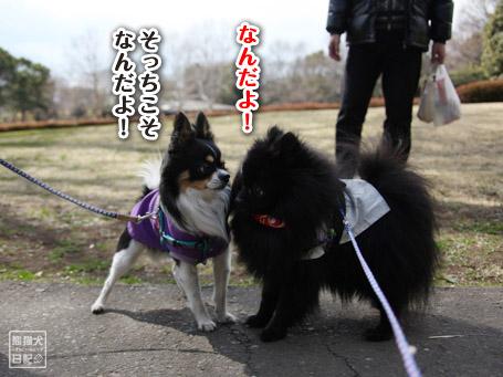 20110403_いろんな犬2