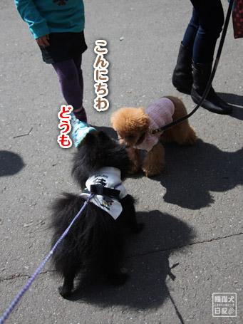20110403_いろんな犬1