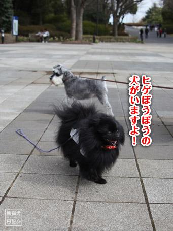 20110403_いろんな犬10