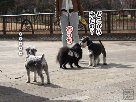 20110403_いろんな犬8