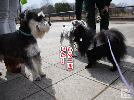 20110403_いろんな犬7
