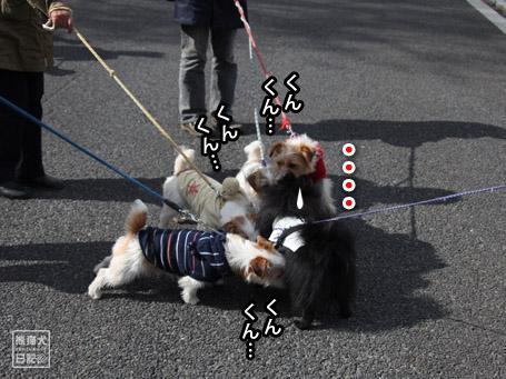 20110417_昭和記念公園6