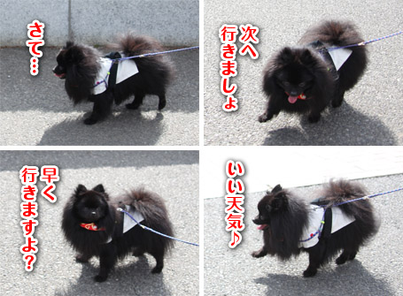 20110417_昭和記念公園4